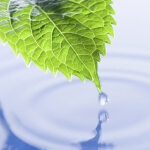 LeafWater